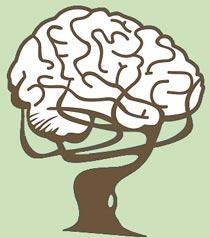 Мозг поглощает сам себя во время диеты