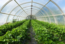 Польза органических продуктов – не более чем очередной миф