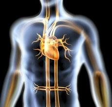 Превращение рубцовой ткани в сердечную мышцу без стволовых клеток