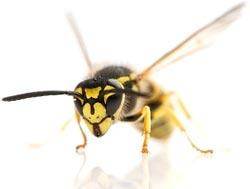 Что делать, когда вас ужалило насекомое