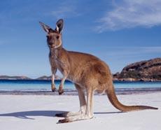 Жить и умирать лучше в Австралии